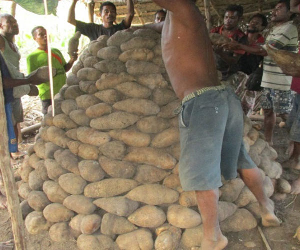 Iconic Attractions - Trobriand Yam Yield
